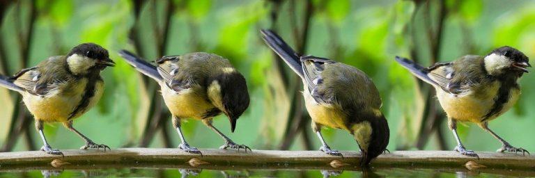 Un piccolo nido per uccelli in 4 semplici mosse