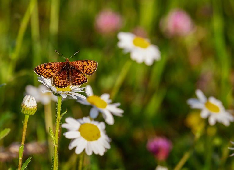 Natura e biodiversità
