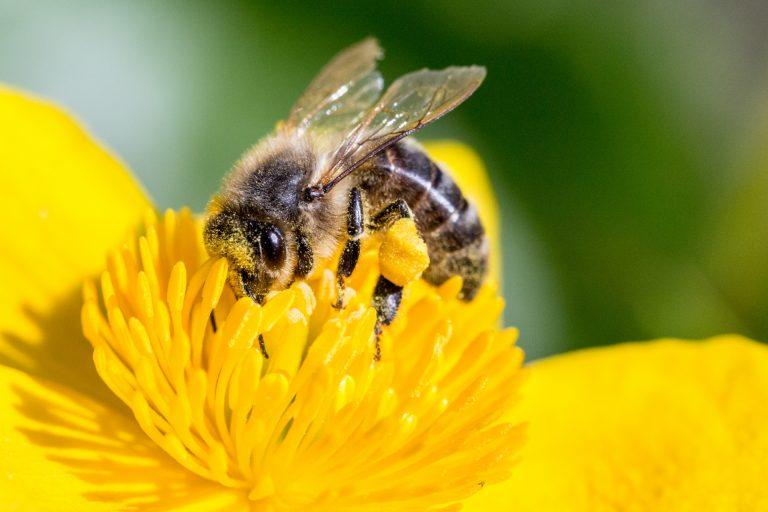 Il mondo delle api e altre curiosità: un blog per educare all'ambiente