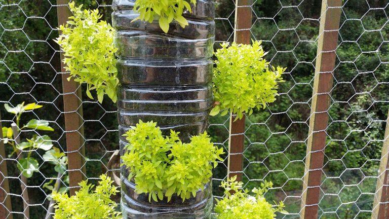 Il giardino verticale con il fai da te