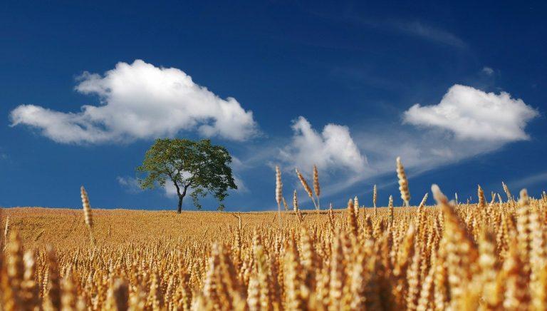La sostenibilità agricola è qui. Earth Day, la crisi climatica chiama una nuova agricoltura