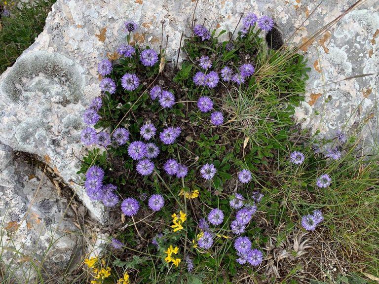 Gite di primavera in un click con i video del progetto LIFE Floranet