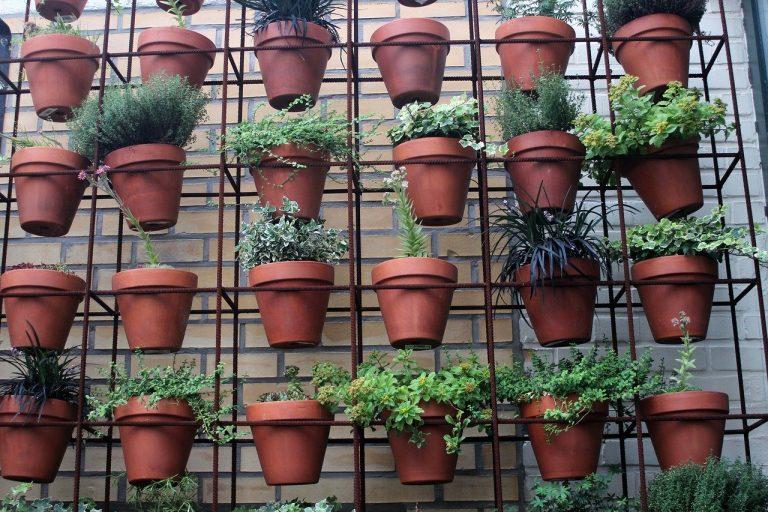 Padova, parte coltivAzioni: facciamo rifiorire la città