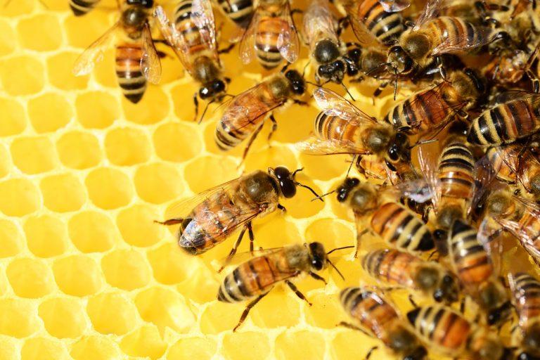 L'Alto Molise diventa il territorio delle api
