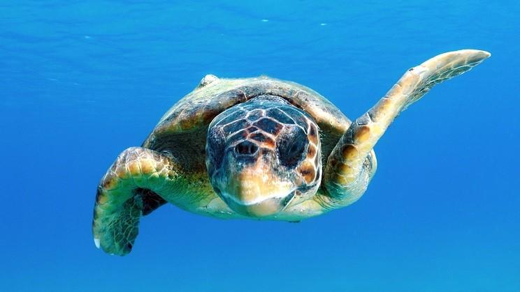 A.A.A. cercasi mamma umana per tartarughe marine
