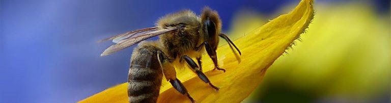 Save the Queen, salviamo le api a rischio estinzione