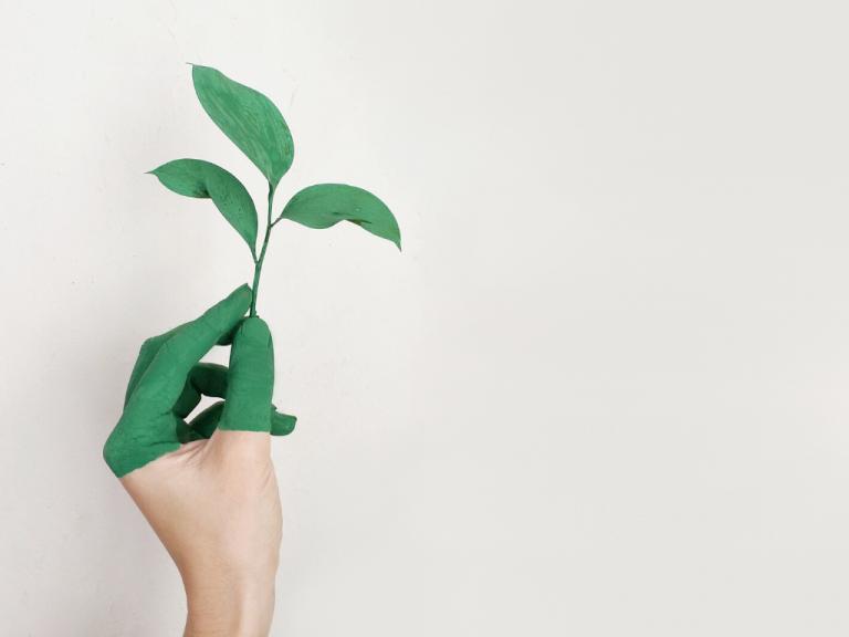Lavori green: prime stime per un futuro sostenibile