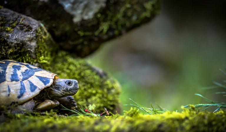 TurtleQuiz. Conosci il mondo delle tartarughe? Mettiti alla prova