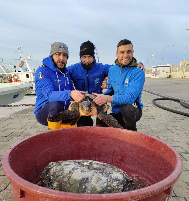 Innamorati delle tartarughe marine: a San valentino adotta Giulietta e Romeo